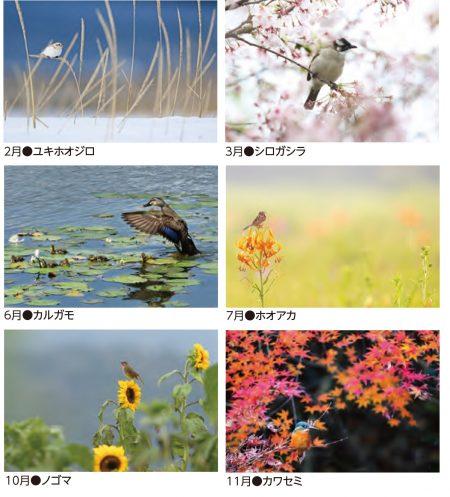 野鳥カレンダー2021写真