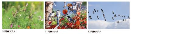 """""""2020年野鳥かレンダー"""""""