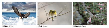 野鳥カレンダー2020